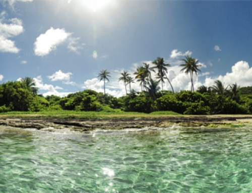 Martinique  – Anse Michel